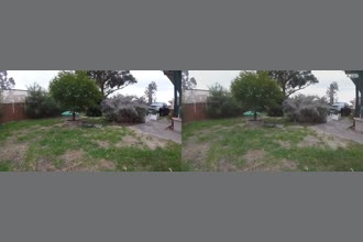 a thumdnail for published video. bird in front yard, australia